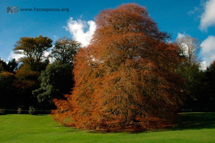 Coole Park - Autograph Tree