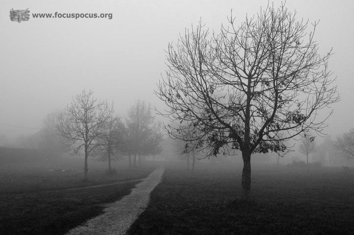 Park in Fog